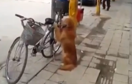 bike-guarding dog