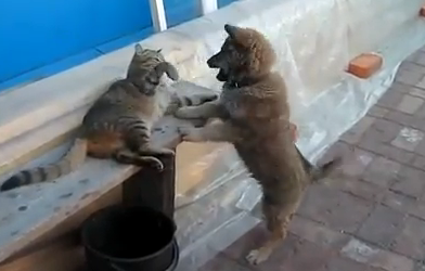 cat slaps puppy