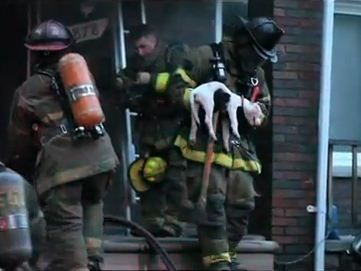 fireman rescues dog