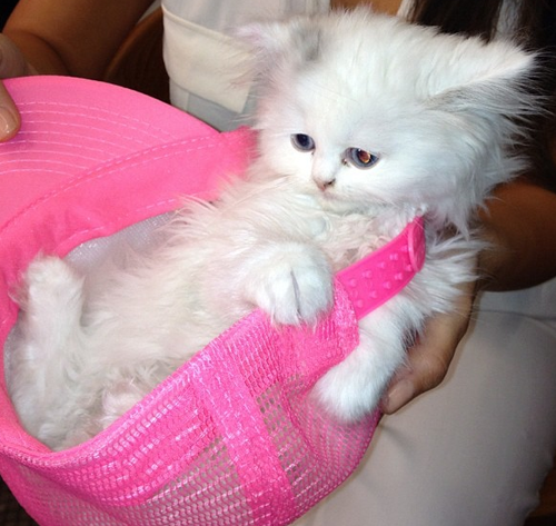 Kim Kardashian's new kitten