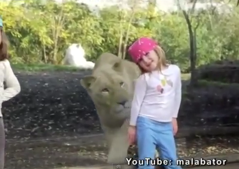 little girl stared down by lion at the zoo