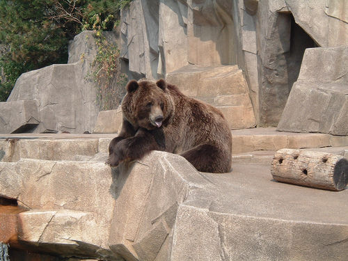bear at zoo