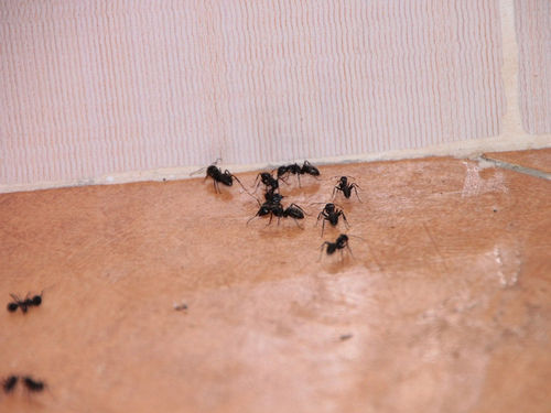 how to kill ants outside my home