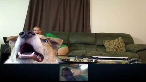 Dog Misses Owner Skype