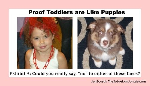 toddler puppy