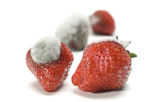 moldy strawberries, things to throw out of refrigerator