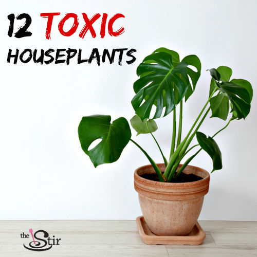 how many of these toxic plants do you have in your home