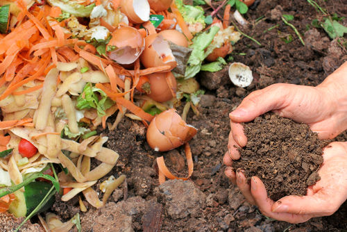 6 Common Composting Mistakes -- So You Don't Make Them!