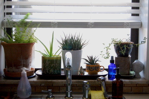kitchen window sink plants