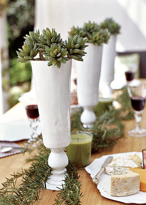 succulents in vases