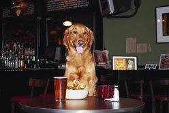 dog in restaurant