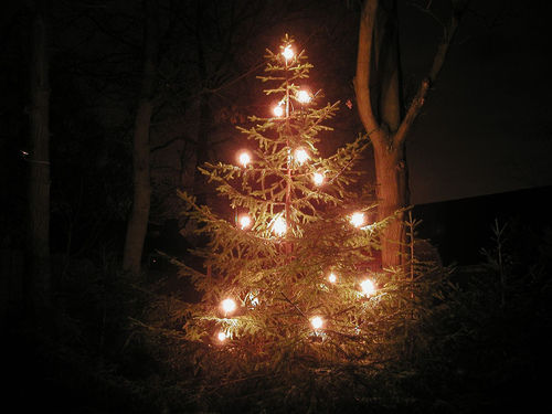 It's Winter Solstice: Let's Talk About Your Christmas Tree