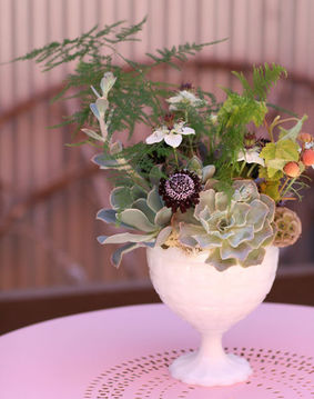 milk glass succulents
