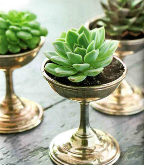 succulents silver glasses