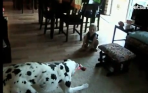 dalmatian and baby