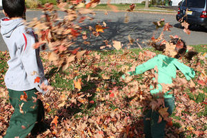 leaf fight