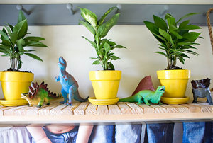 playroom shelf plants