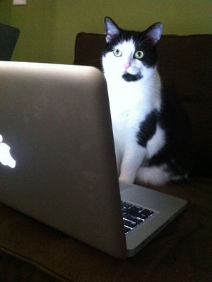 cat checking email