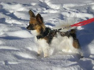 Puppy standing in snow