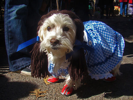 dorothy wizard of oz costume dog