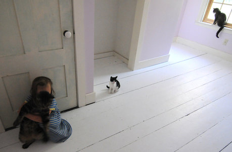 girl cats white painted floor
